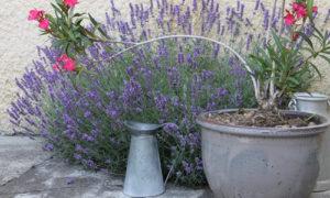 Décoration extérieur, coin fleuri dans la cour